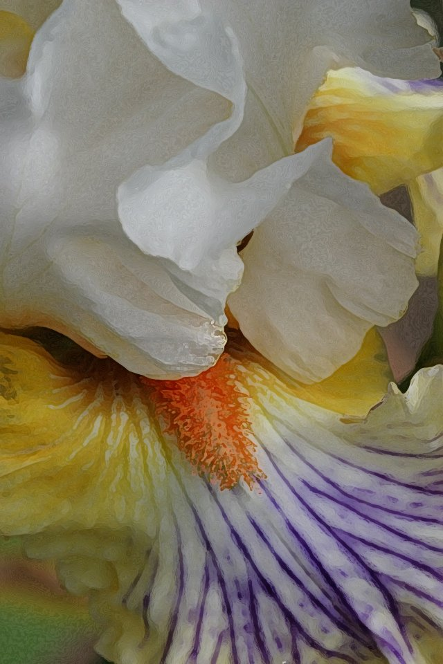 Photographing Irises and Roses